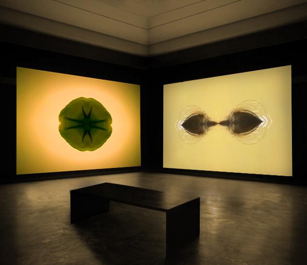 Organism II. 2019. installation. Video and sound.